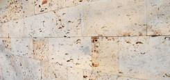 Calcar-cochilifer---Piatra-Dobrogeana-4