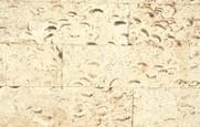 10cm - Calcar cochilifer - Piatra Dobrogeana