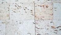 Calcar cochilifer - Piatra Dobrogeana 1