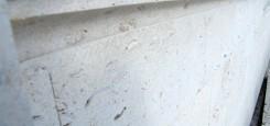 Calcar-cochilifer---Piatra-Dobrogeana-14
