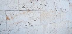 Calcar-cochilifer---Piatra-Dobrogeana-15