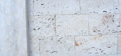 Calcar-cochilifer---Piatra-Dobrogeana-17