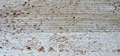 Calcar-cochilifer---Piatra-Dobrogeana-20